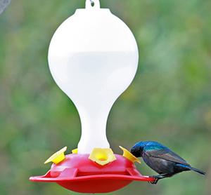 מתקן האכלה לציפורי שיר צופיות