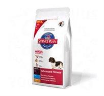 מזון Sience Plan לכלב בוגר + חטיף מתנה