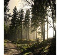 חופשה מעולם אחר ביער השחור! טסים הלוך ושוב לבאדן באדן בגרמניה רק ב€299* לאדם!