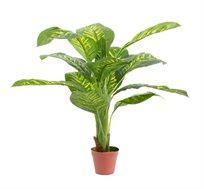 צמח נוי דיפנבכיה עם 11 עלים