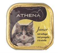 16 מעדני אתנה איכותיים לגורי חתולים בטעם עוף