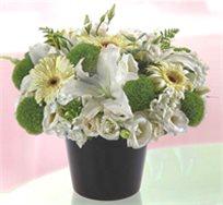 """""""אהבה טהורה"""" סידור פרחים מרהיב השזור בתוך כלי מיוחד"""
