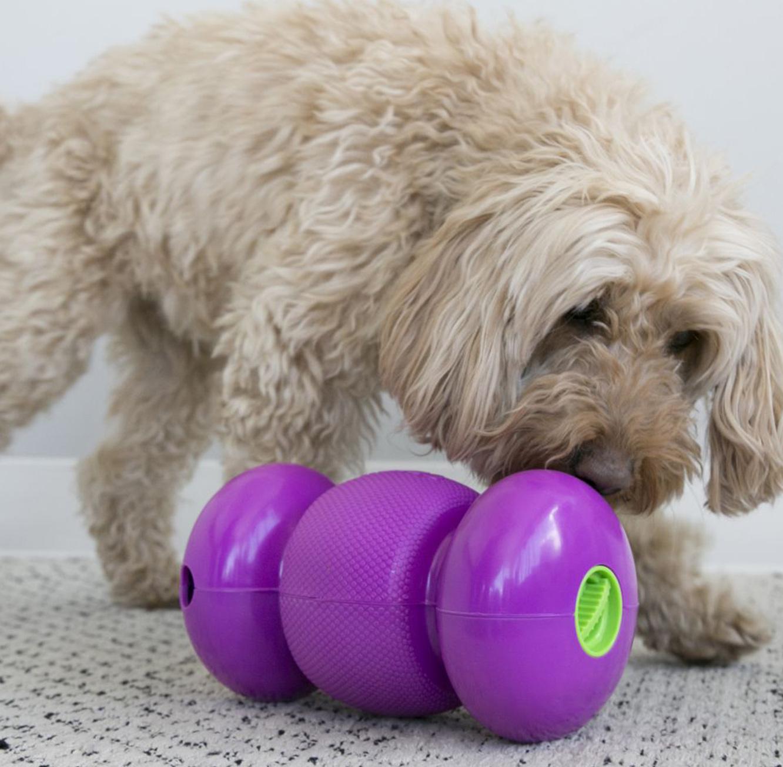 משחק אינטראקטיבי לכלב Kong Replay מידה S מתגלגל ומוציא חטיפים + חטיף סראנו מתנה - תמונה 3