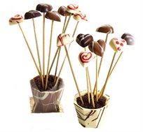 עציץ אהבה משוקולד