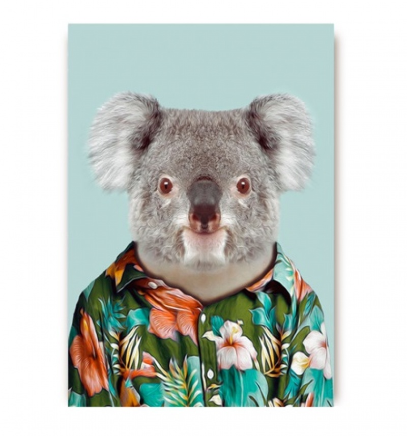 גלויה דב קואלה עם חולצה פרחונית