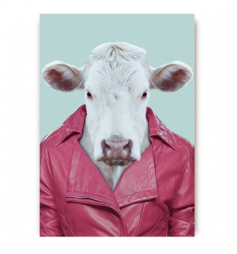 גלויה פרה עם מעיל עור