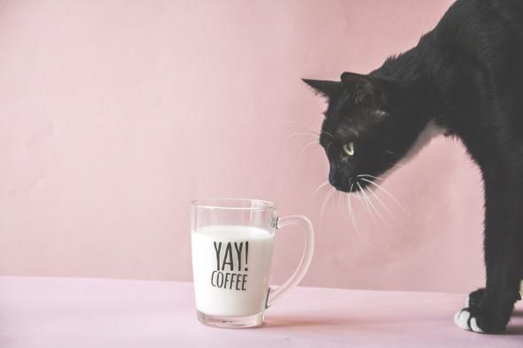 ספל זכוכית yay! coffee