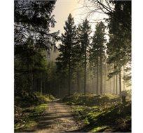 יולי אוגוסט ביער השחור, 7 לילות כולל אירוח בכפר נופש ורכב החל מכ-€790*