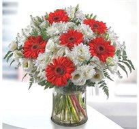 איחולים! זר בגוונים של אדום ולבן המורכב מחרציות לבנות וגרברות אדומות