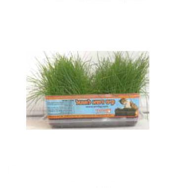 כדורי שיער פתרונות - דשא לחתול לשתילה באדנית