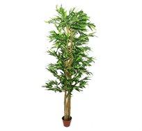 צמח נוי במקוק 12 קנים לכד