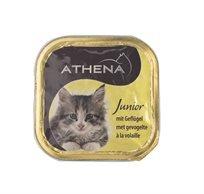 10 אתנה מעדן לגורי חתול עם עוף