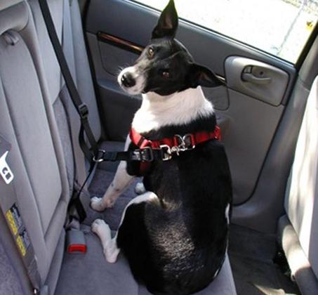 סט בטיחות לנסיעה עם הכלב הכולל רצועת בטיחות ורתמת גוף - תמונה 4